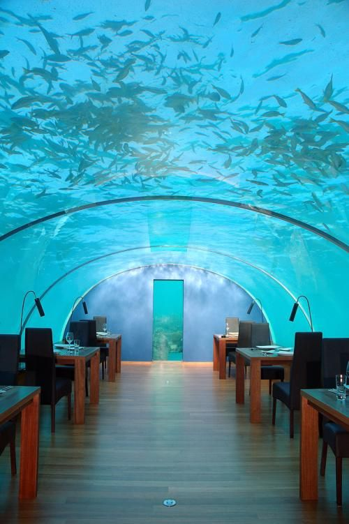 The first ever all-glass undersea restaurant in the world opens its doors for business at the Hilton Maldives Resort & Spa. It will sit five meters below the waves of the Indian Ocean. #travel #tourism #favourite #places #spaces #place #space #restaurant  #food