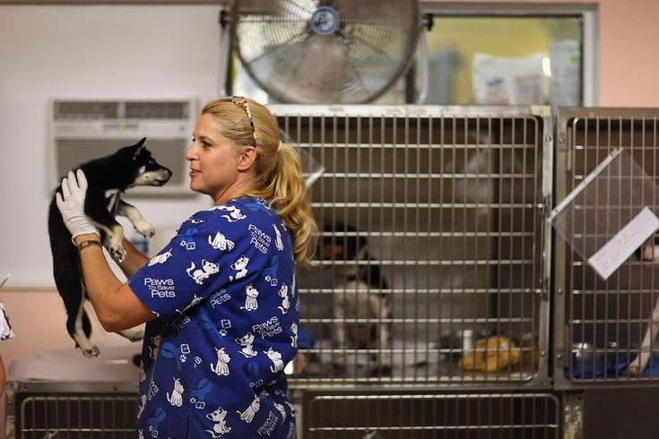 Best Vet Related Job Search Sites