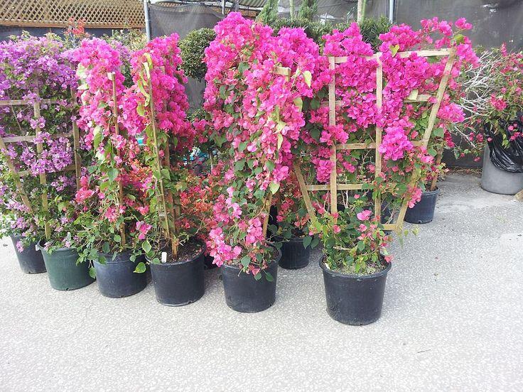 Balcony Flowers Ideas Hanging Baskets