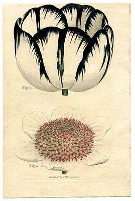 botanical printableBotanical Illustration, Floral Prints, Botanical Prints, Vintage Prints, Flower Prints, Black White, Black And White Graphics Art, Vintage Botanical, Graphics Fairies