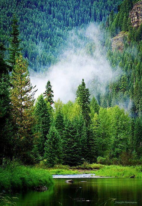 Попрошайничать Национальный лес, штат Айдахо.. через pinterest