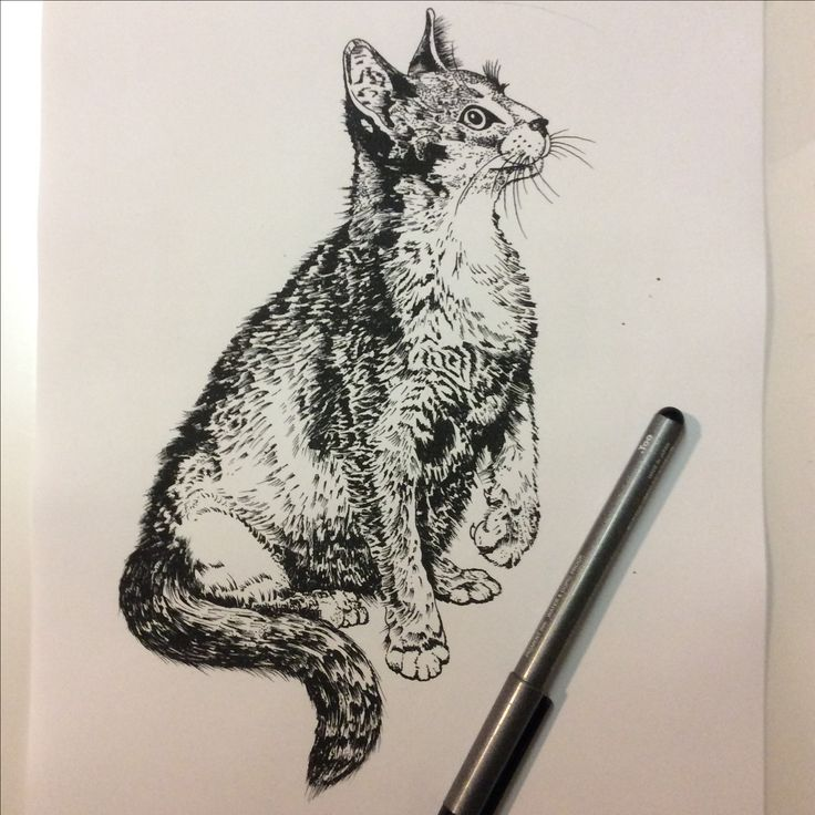 Pen and ink illustration for a study of animal composition and gestures. Done by Tampa tattoo artist Scott Fischer