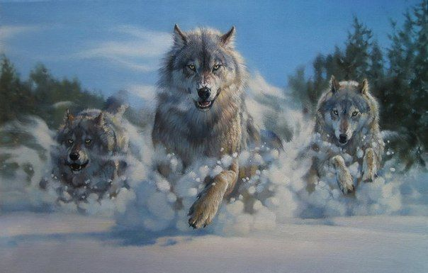 Wolves running in the snow.