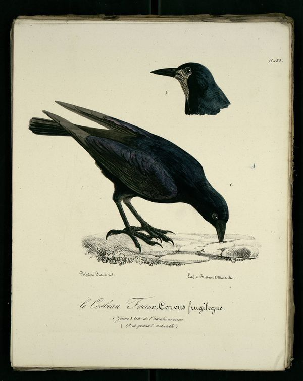 1419 best images about art graphite - corbeau on Pinterest ...  1419 best image...
