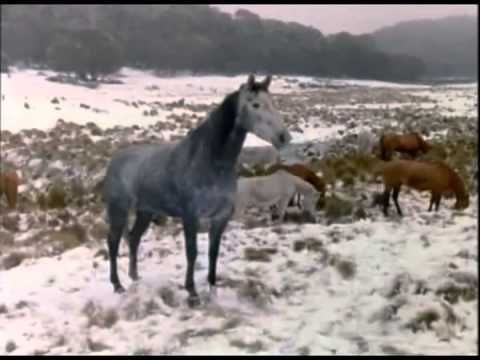 A Lenda do Cavalo Prateado