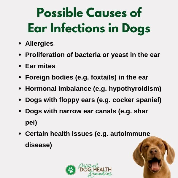 signs of ear infection in dogs