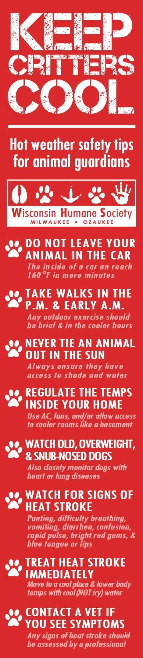 Keep your animals safe during hot summer months!: Summer Months, Animals Safe, Summer Safety, Pets Safe, Healthy Pets, Friend, Pet Tips, Hot Summer