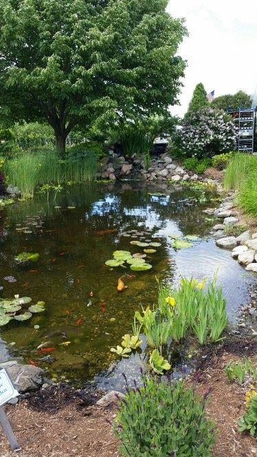 68 mejores imágenes sobre Pondscapes en Pinterest Estanques
