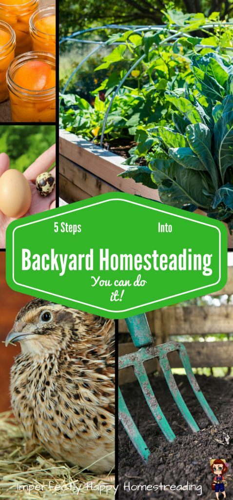 5 Steps Into Backyard Homesteading - You Can Do It!