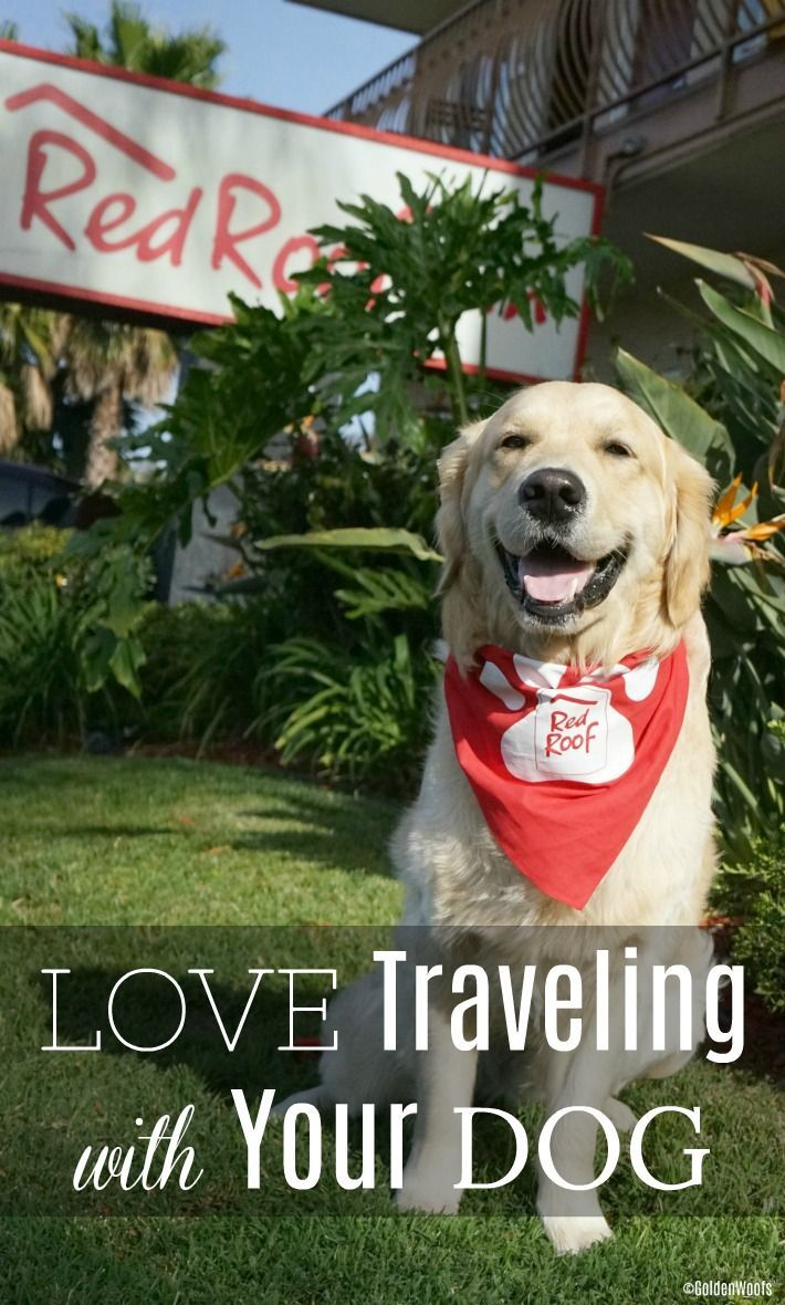 Top 5 Most Popular Hotel Chains For Pet Friendly Stays Pets Pet Friendly Pet Travel