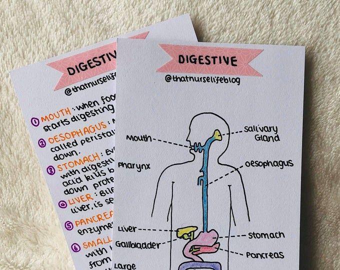 Anatomy Bundle Flashcards Pdf Anatomy Flashcards Study Flashcards Science Flashcards