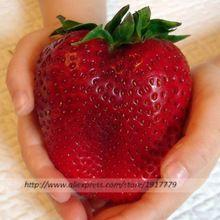 200 sztuk/Giant truskawki jadalne nasiona owoców nasiona rzadkich Organicznych w Bonsai, organiczne owoce nasiona truskawek dla Domu Rośliny ogrodowe(China (Mainland))