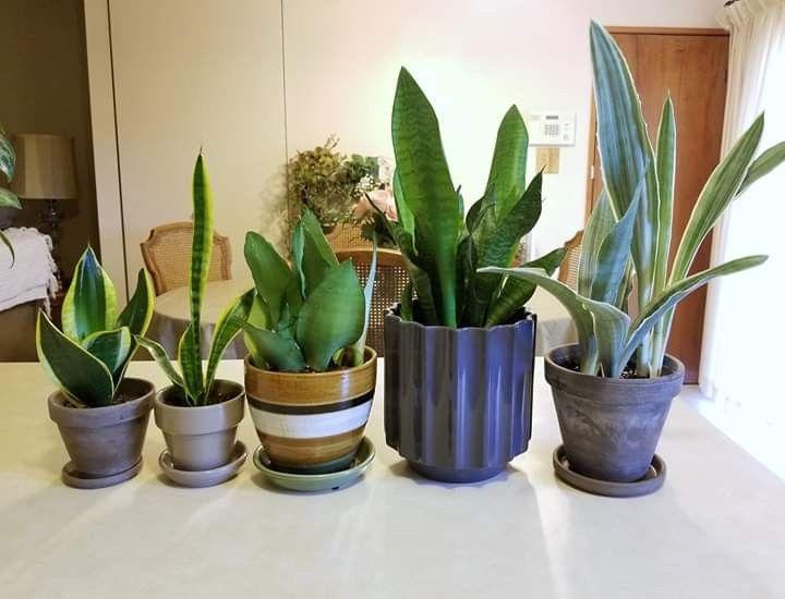 Plants By Life Cycle Avec Images Maison