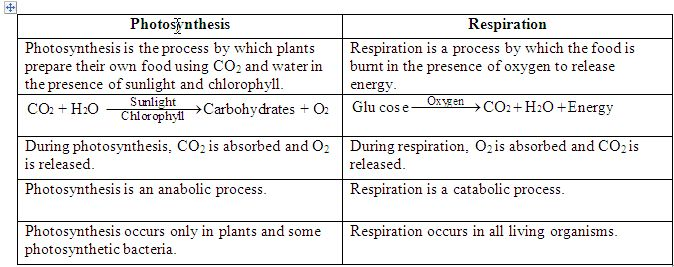 photosynthesis and cellular respiration similarities