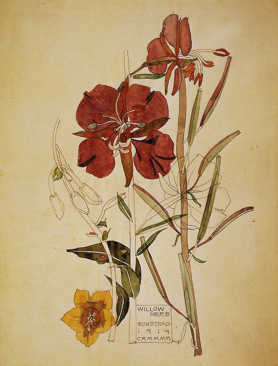 Willow Herb, Charles Rennie MacIntosh