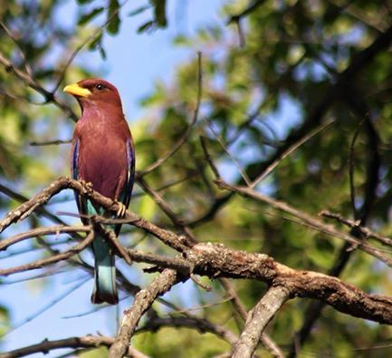 After the rain we've just experienced, all the wonders of the bush are coming out . As you can see from this Broad Billed Roller and the grey Tree Frog ( Foam Nest Frog) the lodges diversity certainly makes it wonderful for all guests. Posted by Chisomo Safari Camp.