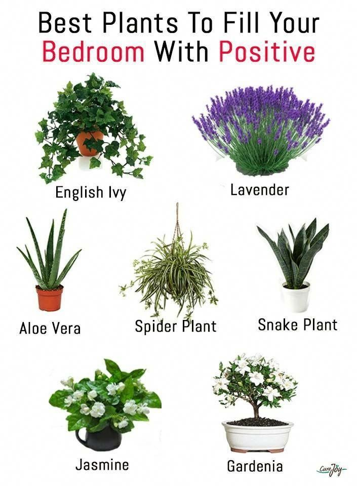 Best Bedroom Plants For Better Sleep With Images Plants Best