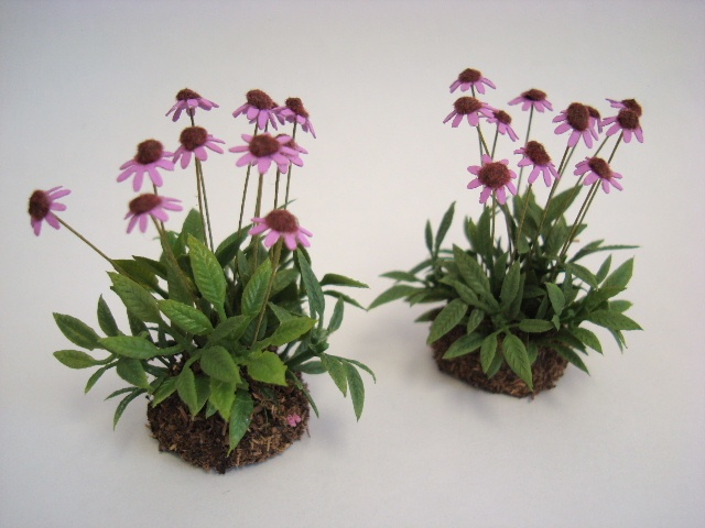 Miniature Pink Cone Flowers