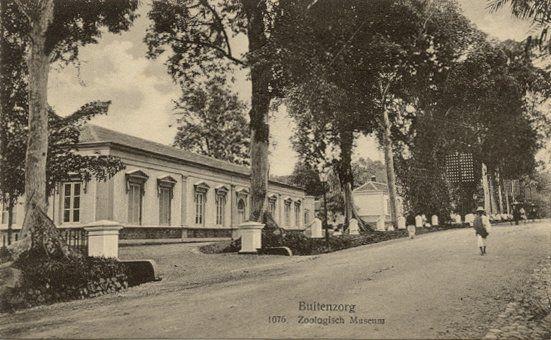 Buitenzorg circa 1900 : Zoologisch Museum.