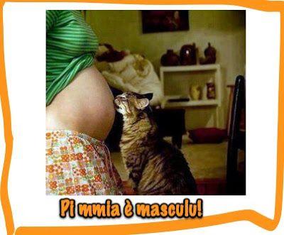 tarlodelvallo humor: Miaopoli