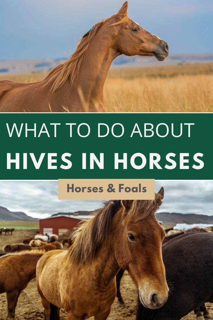 My Horse Has Hives What To Do About Hives In Horses In 2020 Horses Horse Care Horse Health