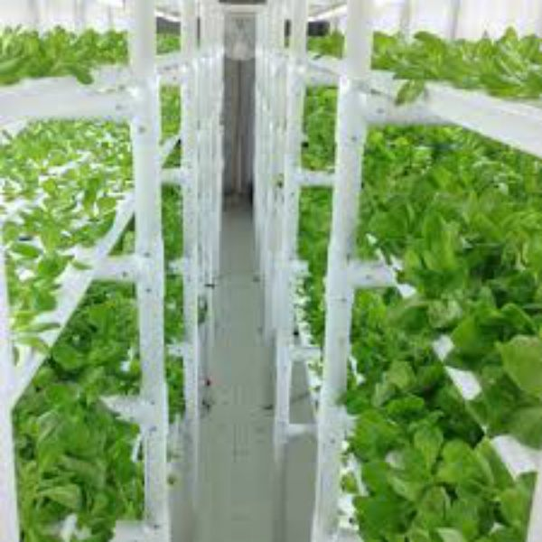 17 best images about soilless garden on pinterest gardens hydroponic systems and juice plus - Hydroponic container gardening ...