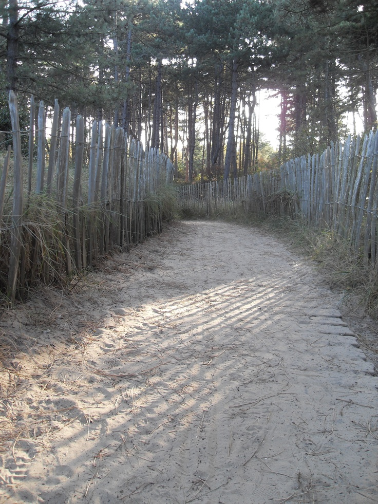 Walk through the pine trees down to the beach at Wells next the Sea - Norfolk