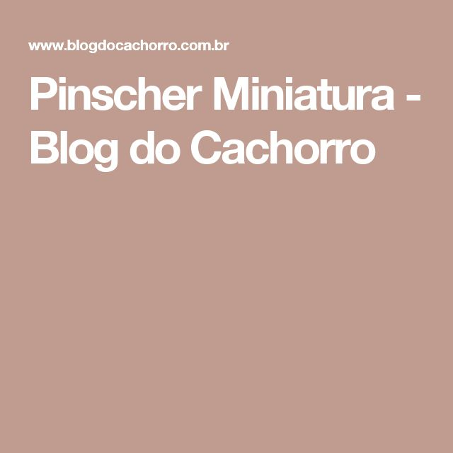 Pinscher Miniatura - Blog do Cachorro
