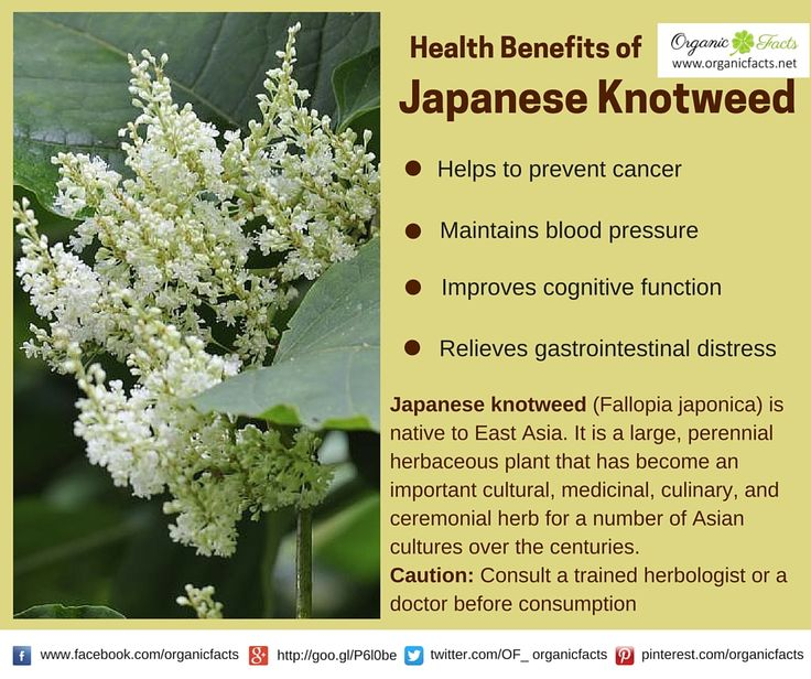 the effect of the japanese knotweed on balance of the ecosystem Select committee written submission page 1 of 11  japanese knotweed, himalayan balsam, pennywort,  be a balance between prevention and containment.