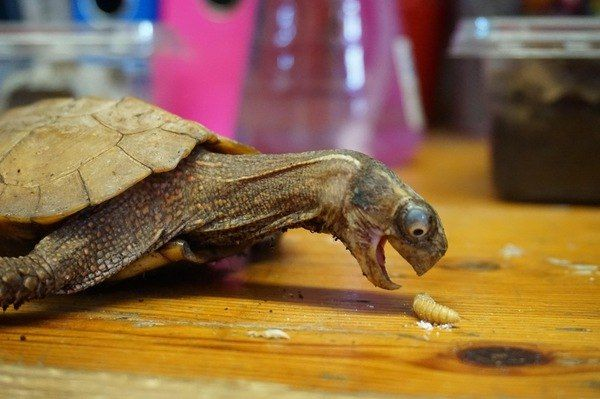 funny turtle | #funny #animals #turtle #hungry #eat #perfect #cute afunnybunny.com