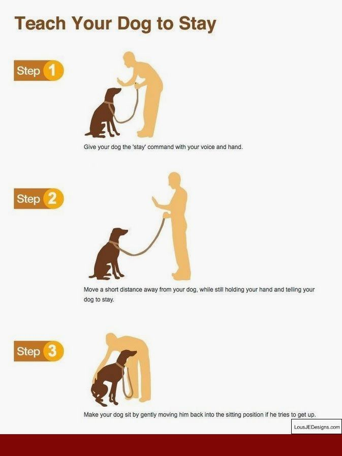 Tips To Train Your Dog And Pics Of Training Your Dog To Stop
