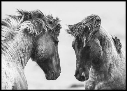 Poster of wild horses, beautiful black and white photo art. This poster is perfect in a basic black frame and nice when combined with other similar posters. www.desenio.com