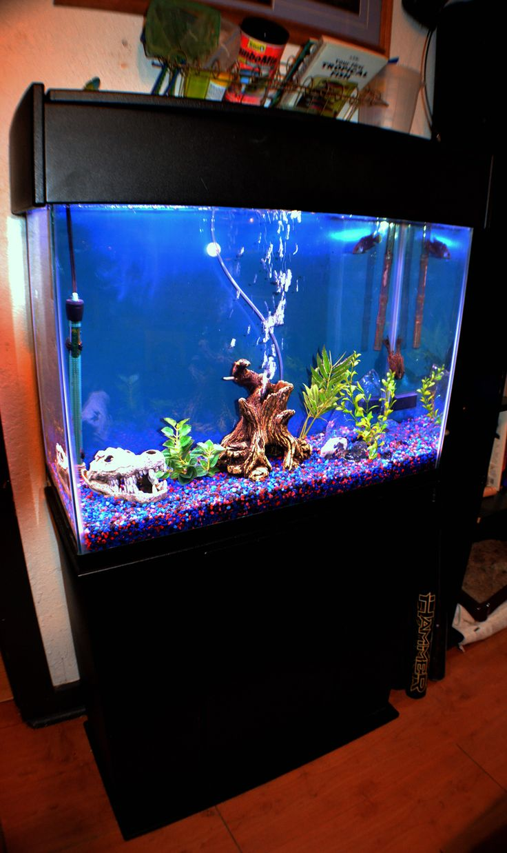 35 best freshwater fish tank images on pinterest for Fish tank set up