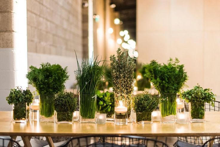 Aromatic herbs used as table centre pieces instead of flowers