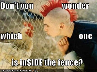 funny chicken pictures (12)
