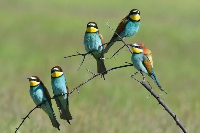 Fotografia utilizatorului Marius Secan din categoria Fotografia wild-life a fost realizata cu Nikon D810