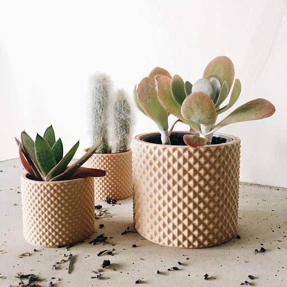 25+ beste ideeën over Binnen vetplanten op Pinterest ...