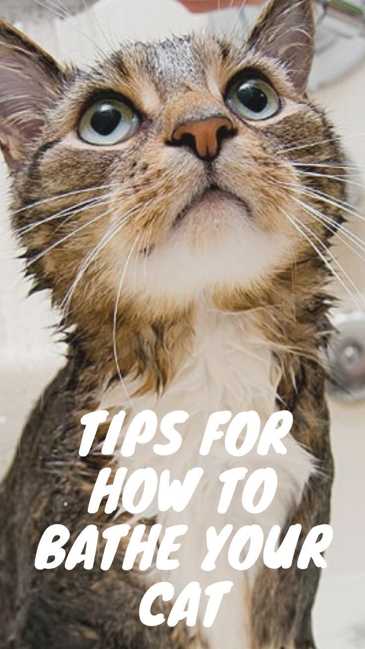Pin On Pet Articles