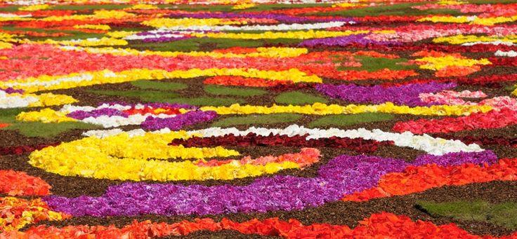 Úrnapi Virágszőnyeg 2012 - Úrnapja - Virágszőnyeg