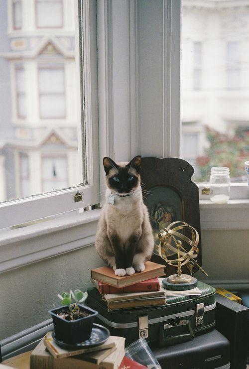sologatos: 33965 Mi gato es más lindo que el suyo (por Dani Padgett Δ)