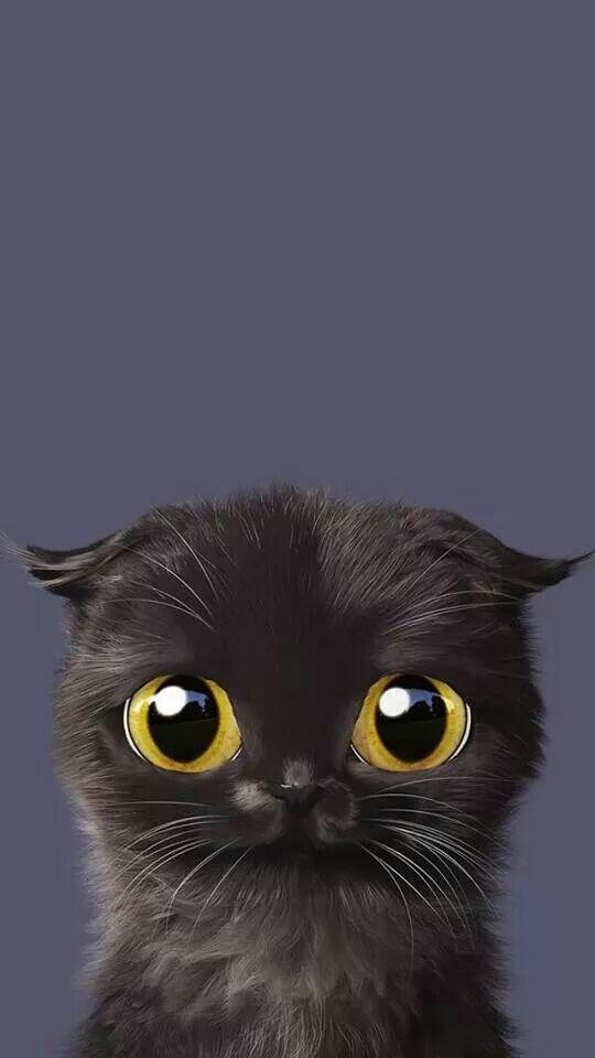Cat Wallpaper for Android iPhone Desktop
