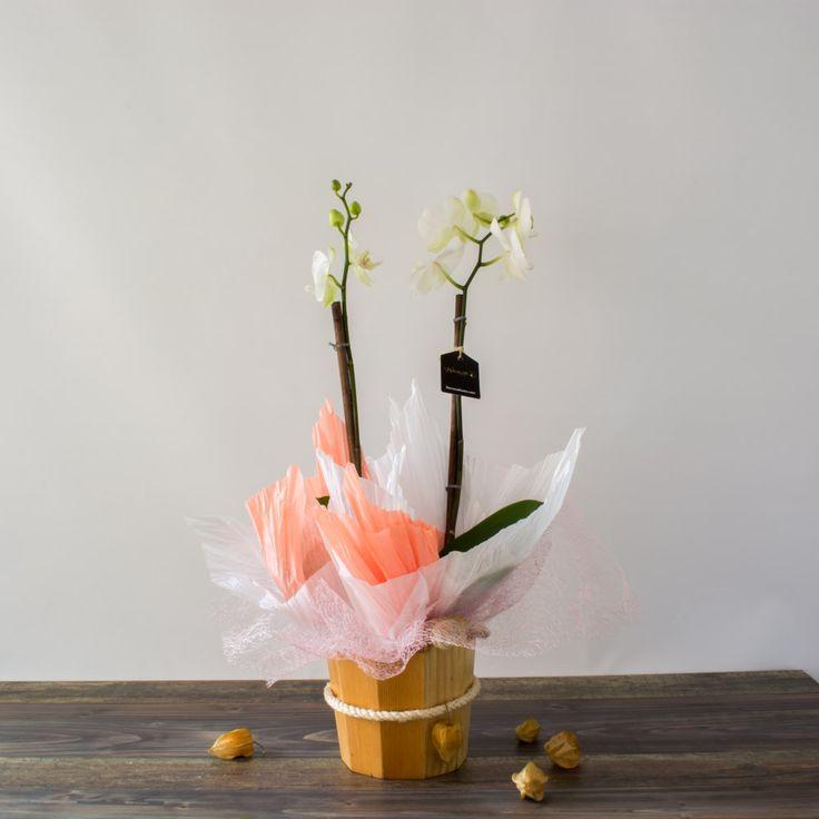 Delicadas orquídeas colombianas. Perfecta idea para un regalo delicado. Encuentra más en: www.floresushuwa.com