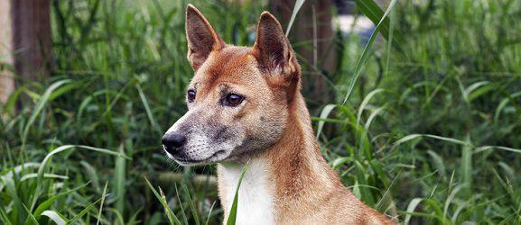 ΤΟΠ 10 ράτσες σκύλων που ζουν περισσότερο