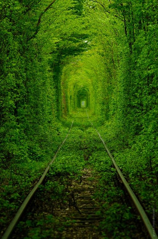 This is the Tunnel of Love in Ukraine. It looks soo kool, and wierd!