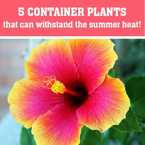 Five Colorful Plants That Can Withstand The Heat