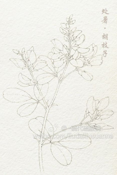 二十四节气花卉,线稿2-硫代硫酸钠_原创...
