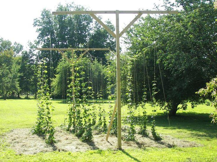 8 best home brew hop garden images on pinterest for Hops garden designs