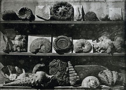 Louis Daguerre—Daguerrotype arrangement of Fossil Shells, 1837-39