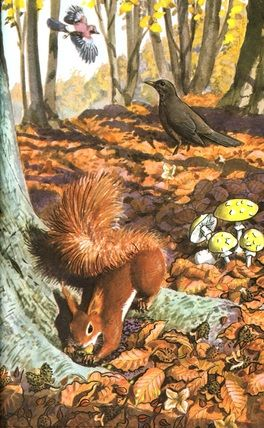 "Red-brown squirrel. (from vintage English ""Ladybird"" storybooks)"
