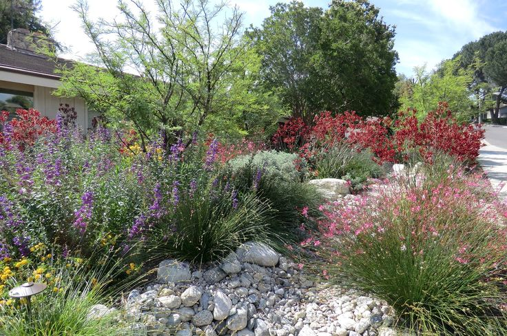 California Native plants, california, plants, native, gardening